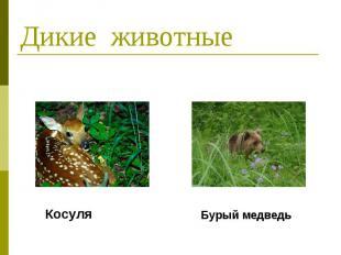 Дикие животные Косуля Бурый медведь