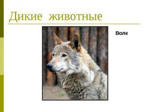 Дикие животные Волк