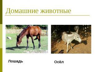 Домашние животные Лошадь Осёл