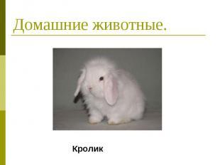 Домашние животные. Кролик