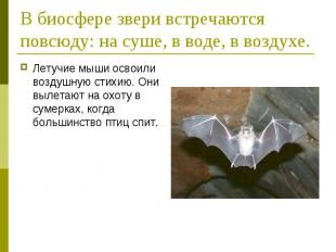 В биосфере звери встречаются повсюду: на суше, в воде, в воздухе. Летучие мыши о