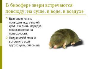 В биосфере звери встречаются повсюду: на суше, в воде, в воздухеВсю свою жизнь п