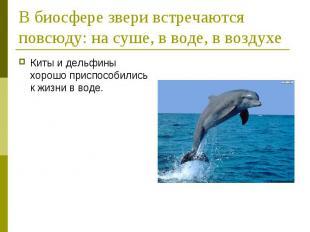 В биосфере звери встречаются повсюду: на суше, в воде, в воздухеКиты и дельфины