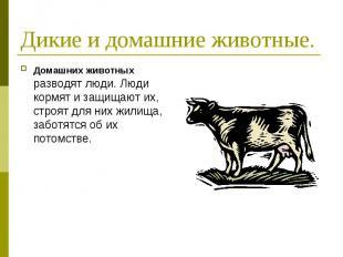 Дикие и домашние животные. Домашних животных разводят люди. Люди кормят и защища