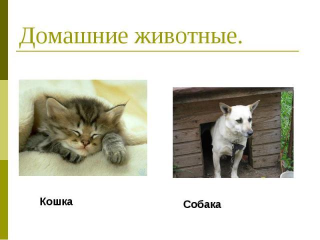 Домашние животные. Кошка Собака