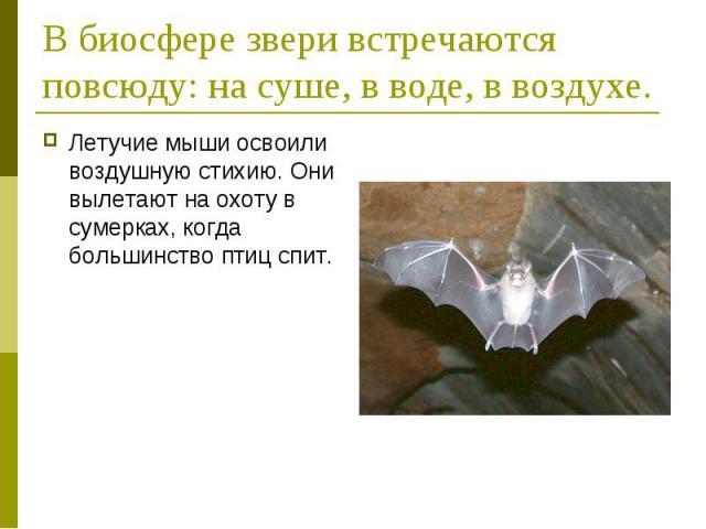 В биосфере звери встречаются повсюду: на суше, в воде, в воздухе. Летучие мыши освоили воздушную стихию. Они вылетают на охоту в сумерках, когда большинство птиц спит.