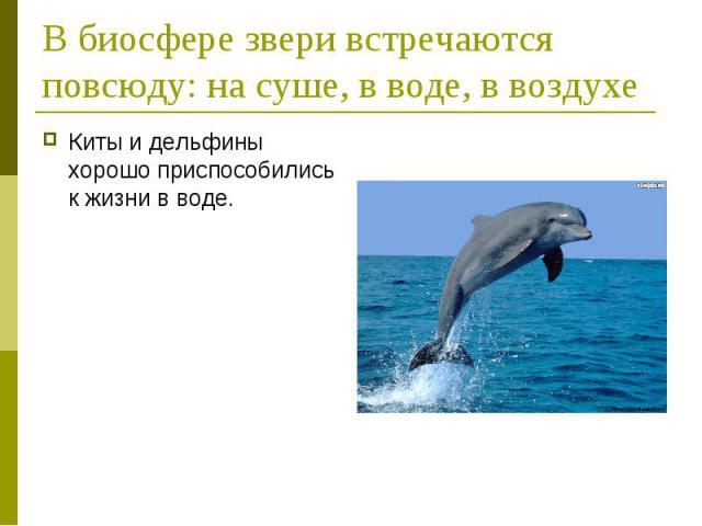 В биосфере звери встречаются повсюду: на суше, в воде, в воздухеКиты и дельфины хорошо приспособились к жизни в воде.