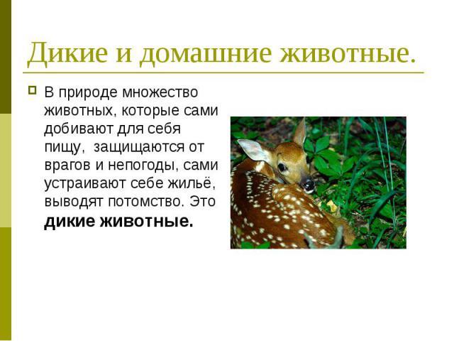 Дикие и домашние животные. В природе множество животных, которые сами добивают для себя пищу, защищаются от врагов и непогоды, сами устраивают себе жильё, выводят потомство. Это дикие животные.