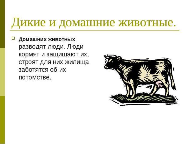 Дикие и домашние животные. Домашних животных разводят люди. Люди кормят и защищают их, строят для них жилища, заботятся об их потомстве.