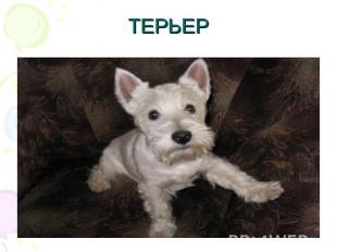 ТЕРЬЕР
