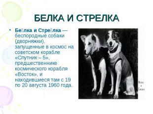 БЕЛКА И СТРЕЛКАБе лка и Стре лка— беспородные собаки (дворняжки), запущенные в