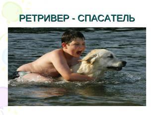 РЕТРИВЕР - СПАСАТЕЛЬ