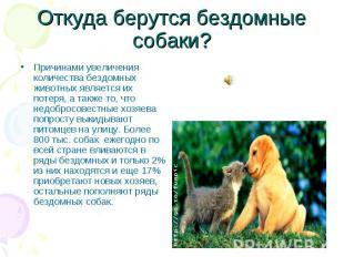 Откуда берутся бездомные собаки?Причинами увеличения количества бездомных животн