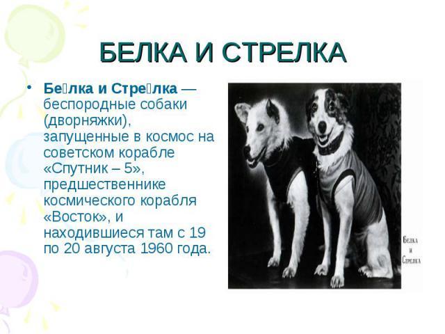 БЕЛКА И СТРЕЛКАБе лка и Стре лка— беспородные собаки (дворняжки), запущенные в космос на советском корабле «Спутник – 5», предшественнике космического корабля «Восток», и находившиеся там с 19 по 20 августа 1960 года.
