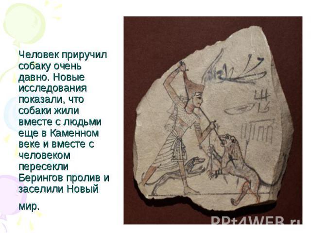 Человек приручил собаку очень давно. Новые исследования показали, что собаки жили вместе с людьми еще в Каменном веке и вместе с человеком пересекли Берингов пролив и заселили Новый мир.