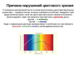 Причина нарушений цветового зрения У человека в центральной части сетчатки распо