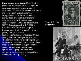 Илья Ильич Мечников (1845-1916) — российский биолог и патолог, один из основопол