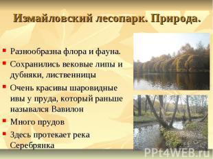 Измайловский лесопарк. Природа. Разнообразна флора и фауна. Сохранились вековые