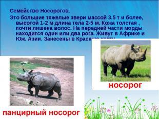 Семейство Носорогов. Это большие тяжелые звери массой 3.5 т и более, высотой 1-2