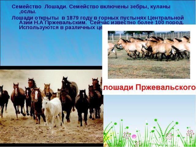 Семейство Лошади. Семейство включены зебры, куланы ,ослы. Лошади открыты в 1879 году в горных пустынях Центральной Азии Н.А Пржевальским. Сейчас известно более 100 пород. Используются в различных целях.
