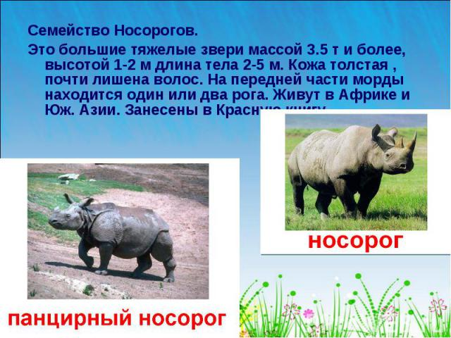 Семейство Носорогов. Это большие тяжелые звери массой 3.5 т и более, высотой 1-2 м длина тела 2-5 м. Кожа толстая , почти лишена волос. На передней части морды находится один или два рога. Живут в Африке и Юж. Азии. Занесены в Красную книгу.