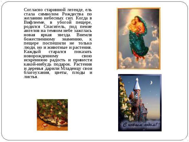 Согласно старинной легенде, ель стала символом Рождества по желанию небесных сил. Когда в Вифлееме, в убогой пещере, родился Спаситель, под пение ангелов на темном небе зажглась новая яркая звезда. Внемля божественному знамению, к пещере поспешили н…
