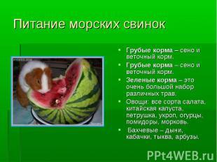 Питание морских свинок Грубые корма – сено и веточный корм. Грубые корма – сено