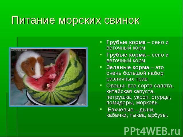 Питание морских свинок Грубые корма – сено и веточный корм. Грубые корма – сено и веточный корм. Зеленые корма – это очень большой набор различных трав. Овощи: все сорта салата, китайская капуста, петрушка, укроп, огурцы, помидоры, морковь. Бахчевы…