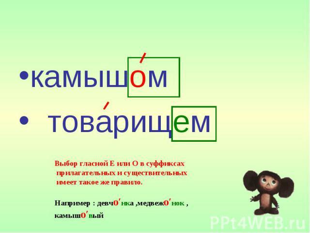 камышом товарищем Выбор гласной Е или О в суффиксах прилагательных и существительных имеет такое же правило. Например : девчо′нка ,медвежо′нок , камышо′вый