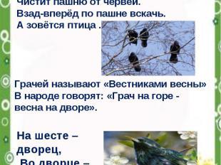 «Вестники весны» Всех перелётных птиц черней, Чистит пашню от червей. Взад-вперё