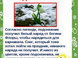 Весенние первоцветы Подснежник Согласно легенде, подснежник получил белый наряд