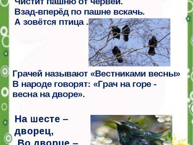 «Вестники весны» Всех перелётных птиц черней, Чистит пашню от червей. Взад-вперёд по пашне вскачь. А зовётся птица … Грачей называют «Вестниками весны» В народе говорят: «Грач на горе - весна на дворе». На шесте – дворец, Во дворце – певец, А зовут его…