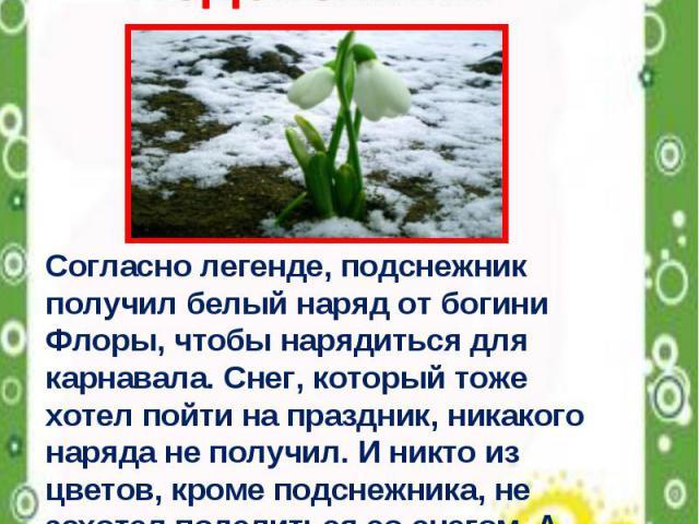 Весенние первоцветы Подснежник Согласно легенде, подснежник получил белый наряд от богини Флоры, чтобы нарядиться для карнавала. Снег, который тоже хотел пойти на праздник, никакого наряда не получил. И никто из цветов, кроме подснежника, не захотел…
