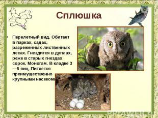 Сплюшка Перелетный вид. Обитает в парках, садах, разреженных лиственных лесах. Г