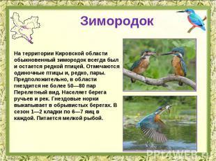 Зимородок На территории Кировской области обыкновенный зимородок всегда был и ос