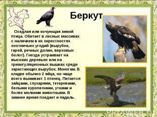 Беркут Оседлая или кочующая зимой птица. Обитает в лесных массивах с наличием в