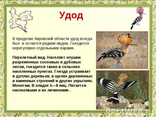 Удод В пределах Кировской области удод всегда был и остается редким видом. Гнездится нерегулярно отдельными парами. Перелетный вид. Населяет опушки разреженных сосновых и дубовых лесов, гнездится также в сельских населенных пунктах. Гнезда устраивае…