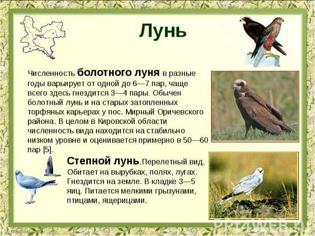 Лунь Численность болотного луня в разные годы варьирует от одной до 6—7 пар, чаще всего здесь гнездится 3—4 пары. Обычен болотный лунь и на старых затопленных торфяных карьерах у пос. Мирный Оричевского района. В целом в Кировской области численност…