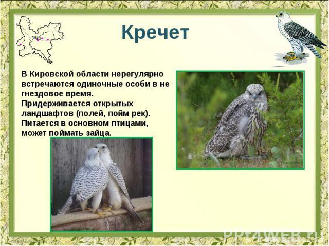 Кречет В Кировской области нерегулярно встречаются одиночные особи в не гнездовое время. Придерживается открытых ландшафтов (полей, пойм рек). Питается в основном птицами, может поймать зайца.