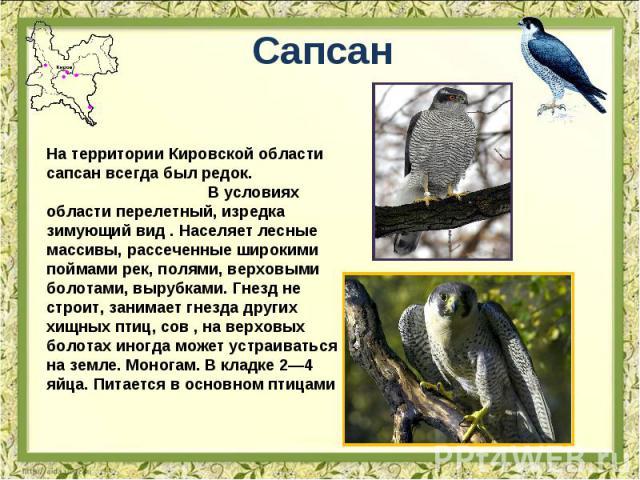 Сапсан На территории Кировской области сапсан всегда был редок. В условиях области перелетный, изредка зимующий вид . Населяет лесные массивы, рассеченные широкими поймами рек, полями, верховыми болотами, вырубками. Гнезд не строит, занимает гнезда …