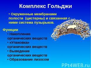 Комплекс Гольджи Окруженные мембранами полости (цистерны) и связанная с ними сис