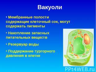 Вакуоли Мембранные полости содержащие клеточный сок, могут содержать пигменты На