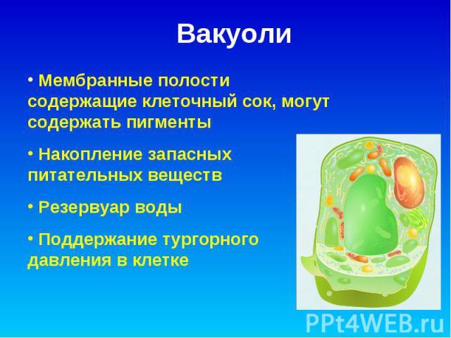Вакуоли Мембранные полости содержащие клеточный сок, могут содержать пигменты Накопление запасных питательных веществ Резервуар воды Поддержание тургорного давления в клетке