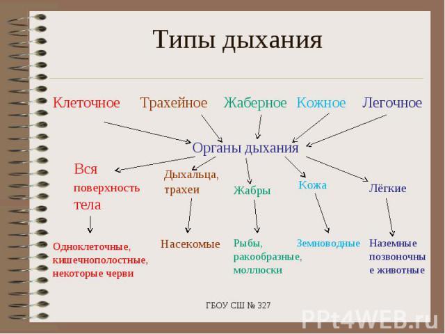 Типы дыхания Органы дыхания