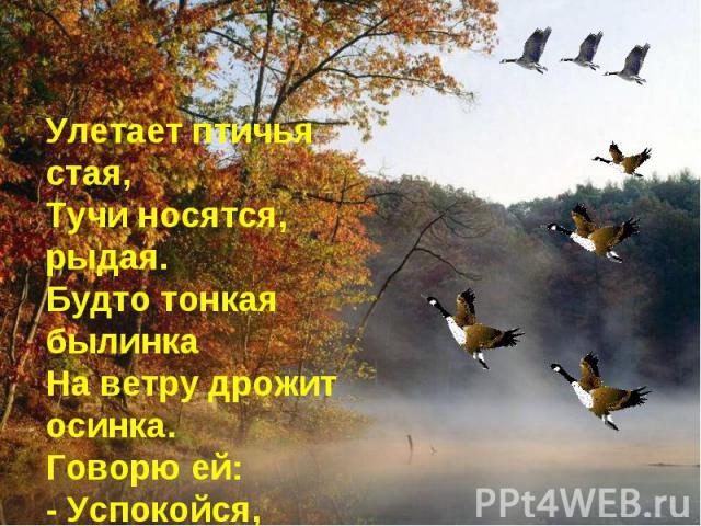 Улетает птичья стая, Тучи носятся, рыдая. Будто тонкая былинка На ветру дрожит осинка. Говорю ей: - Успокойся, Белой зимушки не бойся.