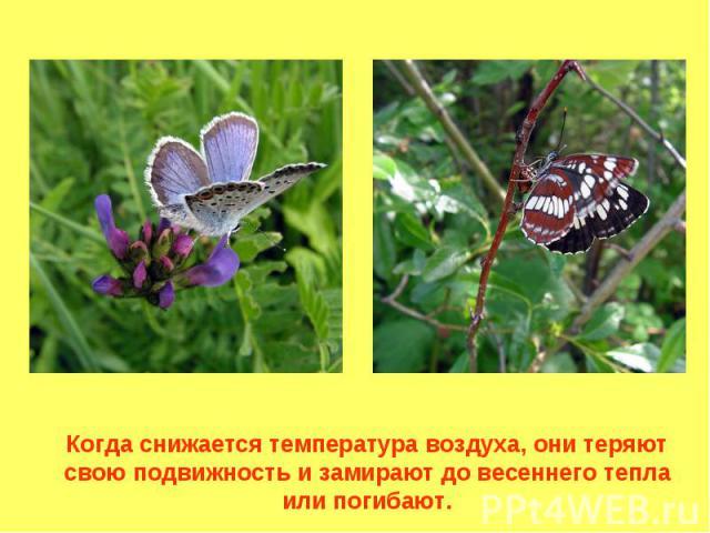 Когда снижается температура воздуха, они теряют свою подвижность и замирают до весеннего тепла или погибают.