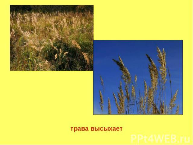 трава высыхает