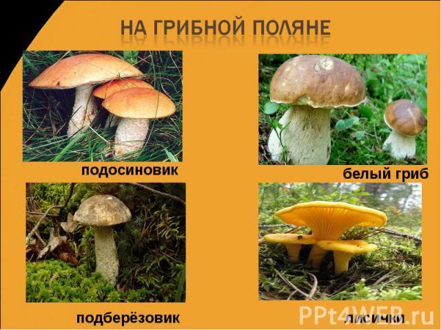 Подосиновик подберезовик белый гриб плесневой гриб