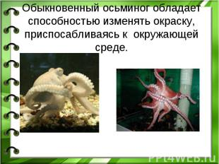 Обыкновенный осьминог обладает способностью изменять окраску, приспосабливаясь к