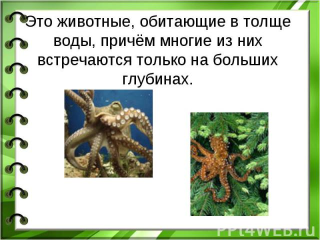 Это животные, обитающие в толще воды, причём многие из них встречаются только на больших глубинах.